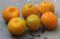 Fruit orange (sweet verity).jpg