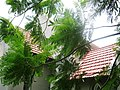 GLORY OF GOD CHURCH, ( OLD ANGLO INDIAN CHURCH ), Yercaud, Salem - panoramio (9).jpg