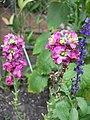 Garden flower sticks (222339784).jpg