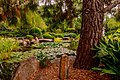 Garden with pond and different plants.jpg