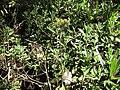 Gardenology.org-IMG 0605 rbgs10dec.jpg