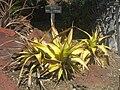 Gardenology.org-IMG 2193 hunt0903.jpg