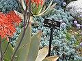 Gardenology.org-IMG 4406 hunt0904.jpg