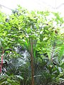 Gardenology.org-IMG 7524 qsbg11mar.jpg