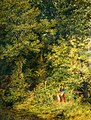 Gathering Wild Flowers, by John Finnie STF WAG OP578-001.jpg