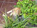 Gatito en el jardin.jpg