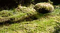 Gelobtbachtal, údolí Klopotského potoka - panoramio (34).jpg