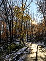Georgia snow IMG 5340 (38947860911).jpg