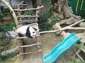 Giant Panda Conservation Centre in Zoo Negara Malaysia 2021 (9).jpg