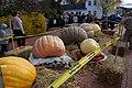 Giant Pumpkins (90767989).jpeg