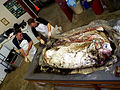 Giant squid with Mike and Clyde.jpg