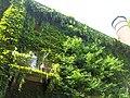 Giardino botanico di Brera (Milan) 172.jpg