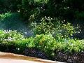 Gibraltar Botanic Gardens, irrigation.jpg