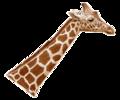 Giraffenhals Blick rechts.png