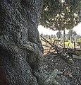 Glasnevin Cemetery - (442812523).jpg