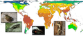Global patterns of terrestrial vertebrate diversity - journal.pbio.1001294.g001.png