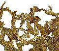 Gold-0302-02b.jpg