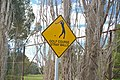 Golf Course Stray Balls warning sign.jpg