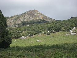 Gogogo, the highest peak of the Gorongosa mountain complex