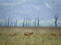 Grace of corbett national park -3.jpg