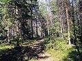 Gran skog (Ångermanland, Sverige) (04-07-2009).jpg