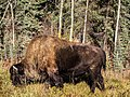 Grazing Power (10312547836).jpg