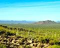 Green Desert (5701145343).jpg