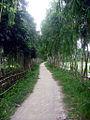 Green Way.JPG