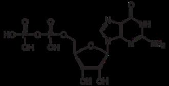 Guanine nucleotide exchange factor - GDP