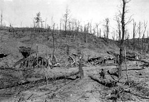 Battle of Asiago - The remaining alpine vegetation after the attack on Asiago.