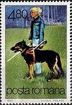 Guide-Dog-Canis-lupus-familiaris.jpg