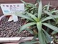 HK 上環 Sheung Wan 香馨里 Heung Hing Lane garden green plant sign Wing Lok Street Queen's Road West October 2019 SS2 01.jpg