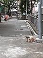 HK 上環 Sheung Wan Possession Street footbridge near 荷李活道公園 Hollywood Road Park puppy dogs walking February 2020 SS2 08.jpg