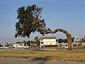 Half a Tree.jpg