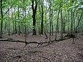 Hambach forest 05.jpg