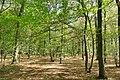 Hambacher Forst bei Morschenich DE 2018-09-09 D.jpg