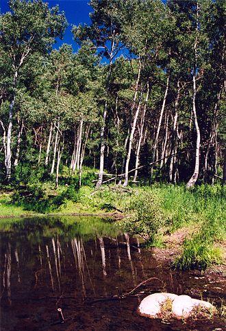 Wasatch-Cache National Forest - Hansen Pond