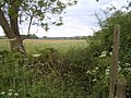 Hedge, fields and Highworth - geograph.org.uk - 446596.jpg
