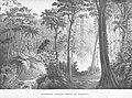 Hermann burmeister floresta mariana.jpg