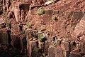 Hermit Shale with Plants - Flickr - brewbooks (1).jpg