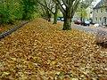 Herne im November 2009, das Laub fällt und bleibt - panoramio (1).jpg