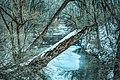 Hinkson Creek on a Winter Day (16606575305).jpg