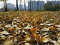 Hongshan, Wuhan, Hubei, China - panoramio (23).jpg