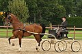 Horse Show at a Stud Farm in Holland.jpg