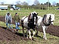 Horses ploughing at Garvaghy - geograph.org.uk - 1224964.jpg