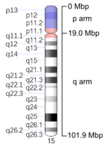 Map of Chromosome 15