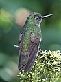 Hummingbird (32885144927).jpg