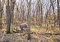 Hunting Blind at Kilen Woods State Park, Minnesota (23946220617).jpg