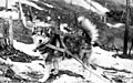 Husky dog in harness, probably Yukon Territory, circa 1898 (AL+CA 1259).jpg