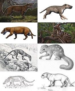 Hyaenodonta Extinct order of mammals